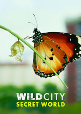 Search netflix Wild City: Secret World